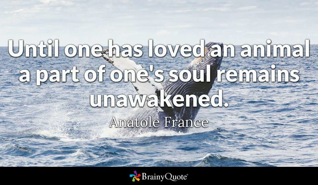 Anatole France Animal Quote Pinterest