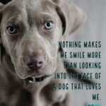 Cute Dog Pictures With Quotes Twitter
