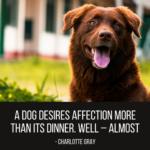 Cute Dog Tag Sayings Facebook