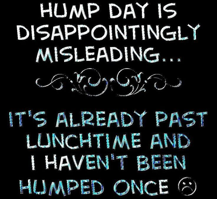 Cute Hump Day Quotes Pinterest