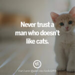 Cute Kitty Quotes Facebook