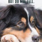 Dog Human Quotes Pinterest