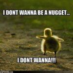 Funny Duck Captions Facebook