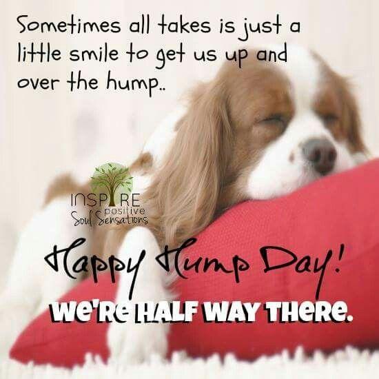 Good Morning Hump Day Quotes Tumblr