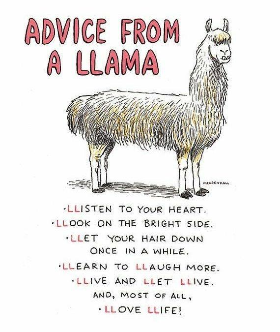Llama Quotes Pinterest